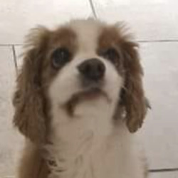 Reunited dog 11 Feb 2021 in fortlawn. UPDATE REUNITED...found....D15 lost /found/ stolen pets