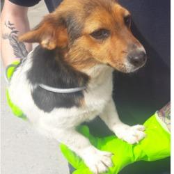 Found dog on 11 Jun 2018 in Cherrywood. found, now in the dublin dog pound...Date Found: 08/06/2018 Location Found: Cherrywood