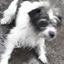 Found dog on 11 Jun 2019 in clondalkin. found, now in the dublin dog pound..Date Found: