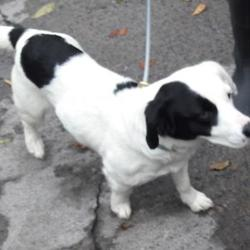 Reunited dog 11 Oct 2017 in Corkagh Park , Clondalkin. update reunited.....found,now in the dublin dog pound... Date Found: Tuesday, October 10, 2017 Location Found: Corkagh Park , Clondalkin