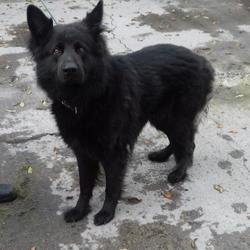 Found dog on 11 Oct 2017 in Dodder Valley Park , Tallaght. found, now in the dublin dog pound... Date Found: Tuesday, October 10, 2017 Location Found: Dodder Valley Park , Tallaght