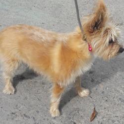 Found dog on 11 Sep 2018 in Johns Bridge. found tallaght, contact dublin dog pound...Date Found: 07/09/2018 Location Found: Johns Bridge