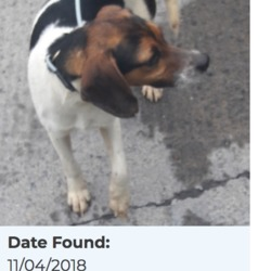Found dog on 12 Apr 2018 in Lucan Village... found, now in the dublin dog pound...Date Found: 11/04/2018 Location Found: Lucan Village