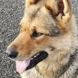 Found dog on 12 Apr 2021 in morington. found...Drogheda Animal Rescue t4Sedpon5rsmoredi  ·  STRAY DOG: Shepherd roaming in Mornington, Co Meath - Monday, April 12th, 2021 This dog is around the Crook Road in Mornington. Appears well-fed but disoriented. Person who reported could not take it in.  If this is your dog, please go out and bring it home. If anyone comes upon this dog and can secure it, please do do & contact us:  Phone: 041 983 2418 Email: info@@dar.ie