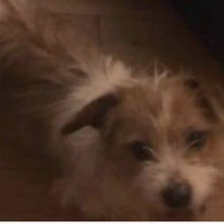 Found dog on 12 Feb 2019 in clonee. found...Athlone Lost and found Like This Page · 14 hrs ·    Hello everyone, This little dog was found in Littlepace, Clonee, Dublin 15. The person who found the dog got the chip scanned and it's registered in Athlone. Please share to find the owner