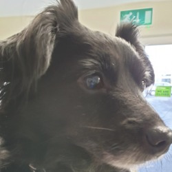 Found dog on 12 Feb 2019 in clonsilla. found...Village Vets 7 mins ·  ** FOUND ** Female terrier x found around St. Mochtas Avenue, D.15. Wearing collar, no microchip. Please contact our Clonsilla clinic with any information on (01) 8213189 thank you