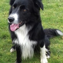 Found dog on 12 Feb 2019 in kells. found...Meath Dog Shelter 19 mins ·  Ref 46, Terrance, male collie, very friendly, found straying near Kells, any information please pm the page or call 0870973911