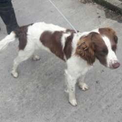 Found dog on 12 Jun 2018 in Whitethorn Est. found, now in the dublin dog pound...Date Found: