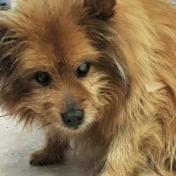 Found dog on 12 Jun 2019 in Cherry Orchard Dublin 10.. found...DSPCA