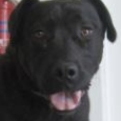 Found dog on 12 Mar 2019 in Aughrim. found...Wicklow Dog Pound 7 hrs ·  is a female Labrador crossbreed found in Aughrim. For further information please contact Wicklow Dog Pound at 0404-4487