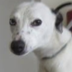 Found dog on 12 Mar 2019 in Bray. found...Wicklow Dog Pound