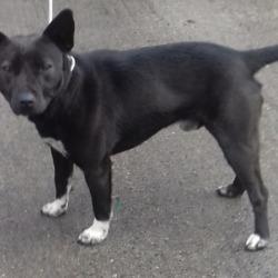 Found dog on 12 Mar 2019 in Mountseskin Brittas. found, now in the dublin dog pound..Date Found: 08/03/2019 Location Found: Mountseskin Brittas