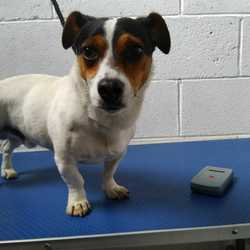 Found dog on 12 Oct 2017 in Carrig Dunn Kells . found.... 2yr old Jrt...found Carrig Dunn Kells 2 weeks ago..ref 296..contact Meath pound on 087 0676766...thanks