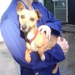 Found dog on 12 Oct 2017 in Deerpark Avenue , Tallaght. found, now in the dublin dog pound... Date Found: Wednesday, October 11, 2017 Location Found: Deerpark Avenue , Tallaght