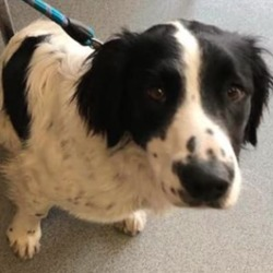 Found dog on 13 Apr 2019 in Metges Rd, Dublin Rd j. found...Last Hope Animal Charity added a new photo. 2 mins ·  ** FOUND **  This lovely girl was found this morning wandering around near the Metges Rd, Dublin Rd junction just outside Navan.  Please let us know in the comments below if you own or recognise her, the finder will be monitoring this post. Proof of ownership will be required.  Please like and share so we can get her back with her family really soon.