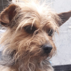 Reunited dog 13 Aug 2020 in Clondalkin. updated reunited...found, now in the dublin dog pound...Date Found: