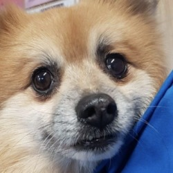 Found dog on 13 Dec 2019 in littlepace. found...Village Vets Dunboyne Just now ·  This little dog was found in the Littlepace area. If you have any information please contact us. Proof of ownership required.