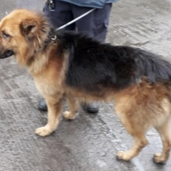 Found dog on 13 Jun 2019 in Deansrath. found, now in the dublin dog pound..Date Found: