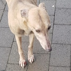 Found dog on 13 Mar 2019 in blanch. found..ITB Students' Union Like This Page · 5 hrs ·    stray dog found on campus this morning, can you spread the word, so if someone knows it, they can collect it