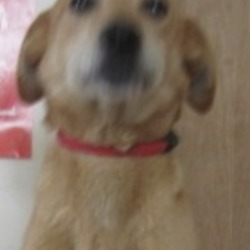 Reunited dog 13 May 2019 in Rathdrum. UPDATED REUNITED....found..Wicklow Dog Pound