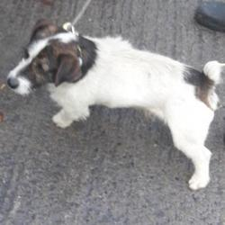 Found dog on 13 Nov 2017 in Fettercairn , Tallaght... found, now in the dublin dog pound... Date Found: Friday, November 10, 2017 Location Found: Fettercairn , Tallaght