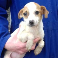 Found dog on 13 Oct 2017 in Cherryfield Way , Templeogue. found, now in the dublin dog pound... Date Found: Thursday, October 12, 2017 Location Found: Cherryfield Way , Templeogue
