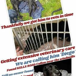 Found dog on 13 Oct 2017 in kells. found...kells