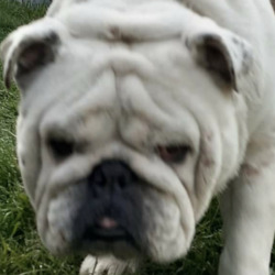 Found dog on 14 Apr 2021 in kildare. found..Lost and Found Dogs Co.Kildare 3h  ·  Update: Dog needs veterinary attention. He is in a veterinary clinic now. Going to the Pound as per legislation  for a few days to be reclaimed or rehomed by a charity