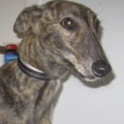 Found dog on 14 Aug 2021 in ashford. found...Wicklow Dog Pound thSmpons4orredh  ·  Archie (pound name) is a male lurcher found in the Ashford area. For further information please contact Wicklow Dog Pound at 0404-44873.