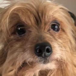 Found dog on 14 Feb 2019 in kildare. found kildare..DSPCA Lost & Found Pets