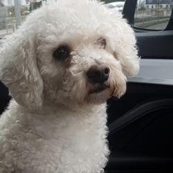 Found dog on 14 Jan 2019 in firhouse road . found...Lorna Nolan 1 hr ·    found on firhouse road please share