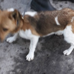 Found dog on 14 Nov 2019 in lucan. found, now in the dublin dog pound..Date Found: