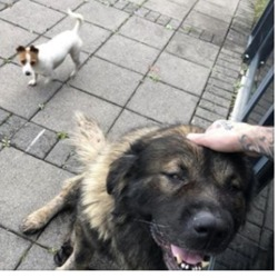 Found dog on 14 Oct 2019 in santry. found..to Ballymun Free Speech Talks