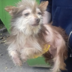 Found dog on 14 Sep 2018 in Brookview. found, now in the dublin dog pound...Date Found: 13/09/2018 Location Found: Brookview