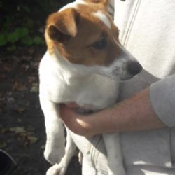Found dog on 14 Sep 2018 in Palmerstown... found, now in the dublin dog pound...Date Found: 12/09/2018 Location Found: Village