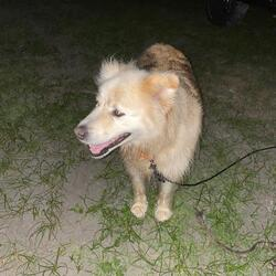 Found dog on 15 Aug 2020 in Quilty. We have found this young dog in a while at the beach at Quilty.