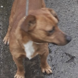 Found dog on 15 Jan 2020 in Clondalkin.... found, now in the dublin dog pound...Date Found: