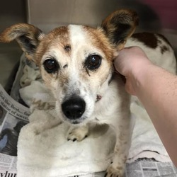 Found dog on 15 Jul 2019 in athboy. found...Paws a While Veterinary Clinic Page Liked · 26 mins ·    Dog Found in Athboy on Saturday  Older male No microchip  Please share