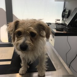 Found dog on 15 Jul 2019 in Tallaght . found..MyVet FirhouseLike Page
