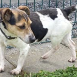 Found dog on 15 Jun 2021 in COMMONS RD NAVAN. found..Meath Dog Shelter 2tSp6noumnstotreed  ·  STRAY REF 73 Found COMMONS RD NAVAN Collar no ID tag. Not chipped.  Full proof of ownership & fee required to reclaim. Appointment required.  Phone 0870973911 Mon to Sat 10am to 3pm.