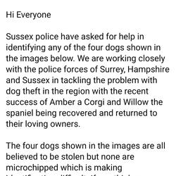 Found dog on 15 Mar 2021 in Sussex England. . Details re dogs found in Sussex believed stolen