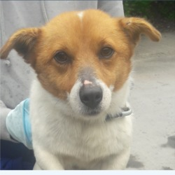 Found dog on 15 May 2018 in Deansrath. found, now in the dublin dog pound...Date Found: 14/05/2018 Location Found: Deansrath