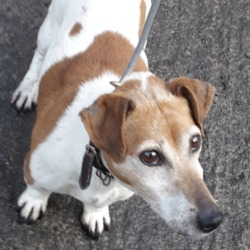 Found dog on 15 May 2019 in Clondalkin. found, now in the dublin dog pound...Date Found: 09/05/2019 Location Found: Village