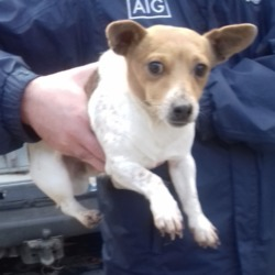 Found dog on 15 Nov 2018 in Jobstown Tallaght. found, now in the dublin dog pound...Date Found: