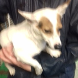 Found dog on 15 Nov 2018 in Main Road Tallaght... found, now in the dublin dog pound..Date Found: