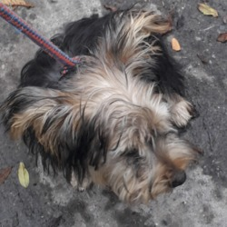 Found dog on 15 Oct 2019 in Newcastle Road. found, now in the dublin dog pound..Date Found: