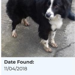 Found dog on 16 Apr 2018 in Bohernabreena. found, now in the dublin dog pound...Date Found: 11/04/2018 Location Found: Bohernabreena