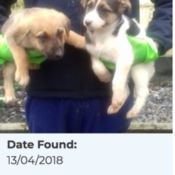 Found dog on 16 Apr 2018 in Tallaght. found, now in the dublin dog pound...Date Found: 13/04/2018 Location Found: Tallaght