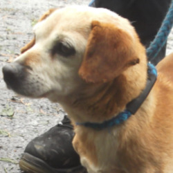 Found dog on 16 Feb 2021 in Tramore Road.. found...Waterford City & County Dog Shelter tSmpo3nsoredla6mm  ·  This sweet little old lady was found on the Tramore Road.  She is a lovely friendly little girl, approx. 12-13yrs old. IF THIS IS YOUR DOG PLEASE CONTACT US ASAP ON 0761 102020. RECLAIM OR REGISTERED RESCUE ONLY PLEASE.