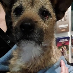 Found dog on 16 Jul 2019 in Kilinarden Heights. found..Priory VetsLike Page July 12 at 6:45 PM ·  Injured, straying male dog handed into us. He was found in Kilinarden Heights. If anybody recognises him get in contact.